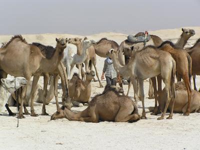 Groepsreis Egypte: Cultuur & Strand; Mummies, piramides en Rode Zee