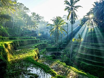 Groepsreis Indonesië: Soenda Eilanden; Draken en kampongs in het 'andere' Indonesië afbeelding