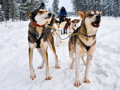 Sfeerimpressie Groepsreis Finland: Lapland - 7 dagen; Winterparadijs in Lapland