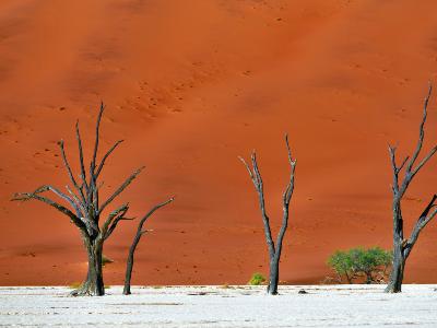 Sfeerimpressie Groepsreis Zuidelijk Afrika in 3 weken; Kamperen tussen de nijlpaarden